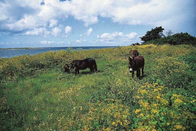 archipel glenan ile saint nicolas anes paturages