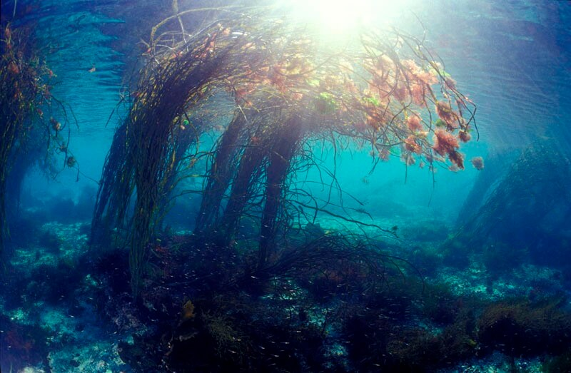 archipel glenan vision sous marine algues silence