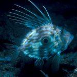 vision sous marine archipel glenan poisson saint Pierre poitn noir