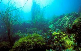 archipel glenan fonds marins herbiers