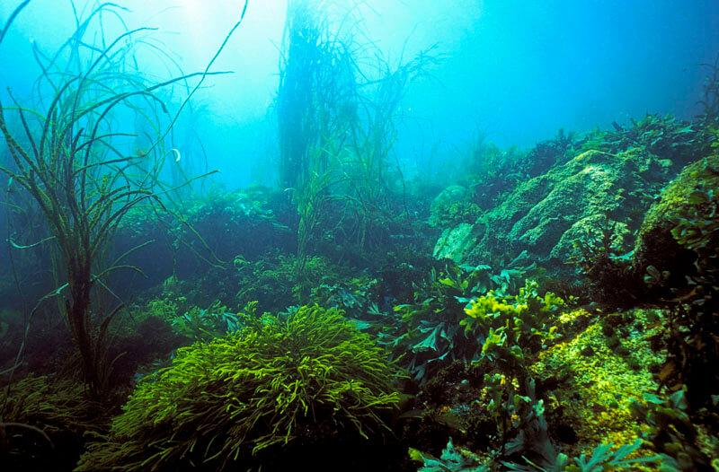 iles glenan fonds marins