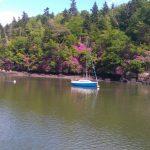 riviere odet benodet quimper croisiere fleur rhododendrons mauve violet