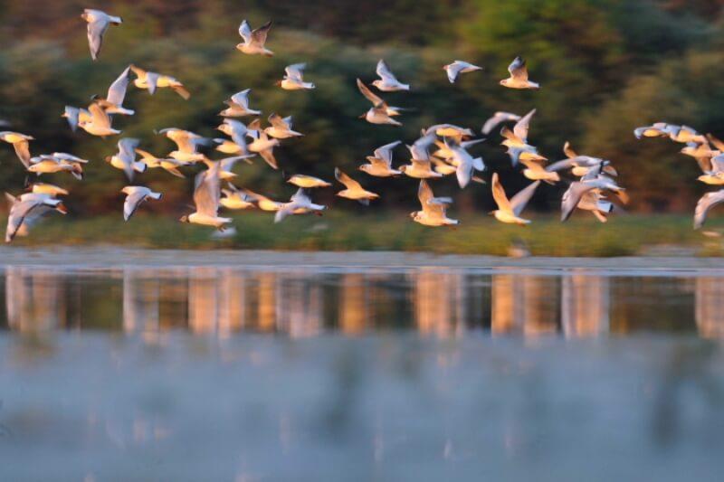 mirage oiseaux sternes riviere odet finistere